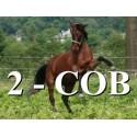 2 - COB