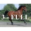 3 - FULL